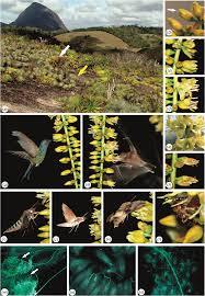 csiro publishing australian journal of botany