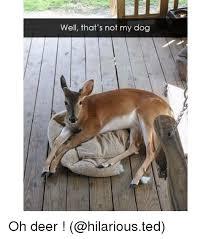 Oh Deer Meme - well that s not my dog oh deer deer meme on me me