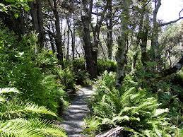 Fort Bragg Botanical Garden Closed Cone Pine Forest At Mendocino Coast Botanical Gardens