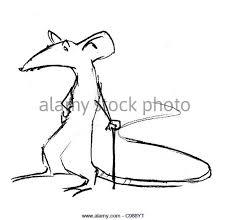 rat drawing stock photos u0026 rat drawing stock images alamy