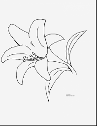 astonishing coloring pages spring flowers clip art with spring
