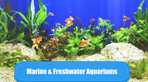 aquarium sim android apps on google play