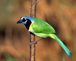 bird wallpapers lovable images birds wallpapers free download wonderful birds hd