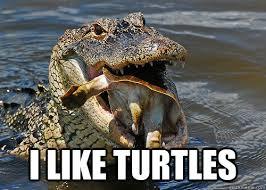 I Like Turtles Meme - turtle memes rawr memes best of the funny meme