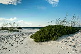 florida native plant list beach plants and sand dunes were made for each other