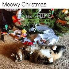 meowy christmas dopl3r memes meowy christmas user submit