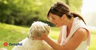 Comfort Pet Certification Service Dog Certification Tips For Picking The Right Dog Certapet