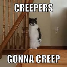 Creeper Meme - creeper cat joey creepercatjoey twitter