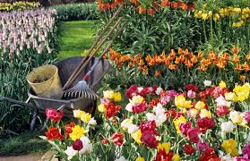 garden flowers that give better bloom for your buck toronto star