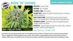cannabis flower marijuana seeds the farm