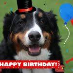 dog birthday card dog and cat cards dog birthday card card from