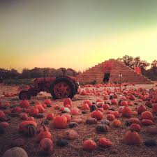 Stanly Lane Napa Pumpkin Patch by Plumpjack Blog Born In San Francisco Celebrating In California