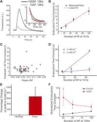 dynamin phosphorylation controls optimization of endocytosis for