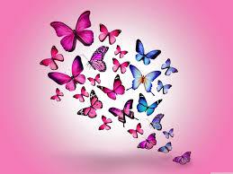 butterflies wallpaper with 49 items