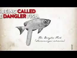 Big Cock Meme - fish with a huge penis youtube