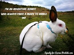 Adventure Meme - carma poodale sunday bunny meme