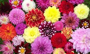 the flowers of summer at 21 most sun kissed flowers in season for july wedding everafterguide