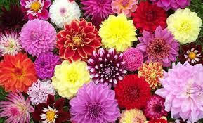 Fall Flowers For Weddings In Season - 21 most sun kissed flowers in season for july wedding everafterguide
