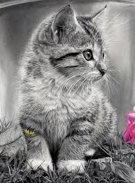 164 best drawing cats u0026 kittens images on pinterest drawings
