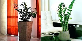 best low light indoor trees indoor tree plants low light luxury indoor tree plants low light for