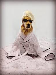 afghan hound attack seaside blog u2014 seaside home veterinary care