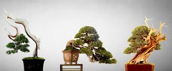 ray nesci bonsai nursery home bonsai minijaturno stablo
