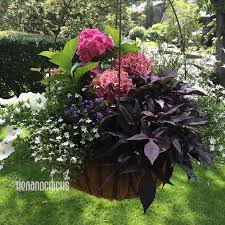 653 best flower hanging planters images on pinterest hanging