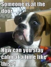 Dog Jokes Meme - funny dog meme joke caption picture order an oil painting of your