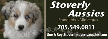 australian shepherd quesnel stoverly aussies australian shepherds and mini aussies