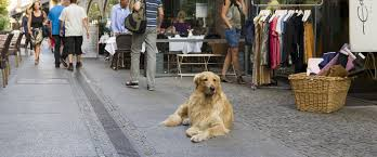 pets news tips u0026 guides glamour berlin with a dog visitberlin de