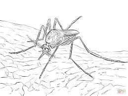 mosquito coloring pages free coloring pages