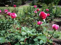 Raleigh Botanical Garden Best Gardens Out And About At Wral