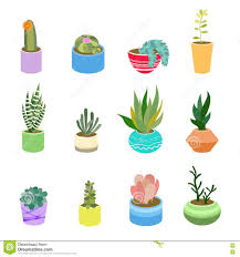 succulents and cactus in pots of different colors cute flat