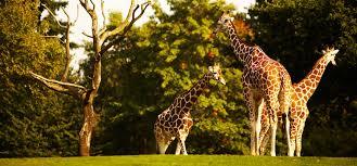 Lincoln Park Zoo Light Hours by Lincoln Park Zoo Animals Tours U0026 Events