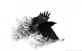 halloween background crow crows wallpapers wallpaperup