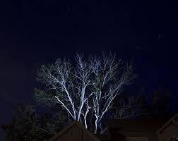 Led Landscape Tree Lights Led Flood Light 8 Rectangle With White Finish 1 050 Lumens