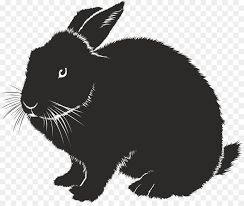 rabbit rabbit domestic rabbit hare animal european rabbit rabbit png