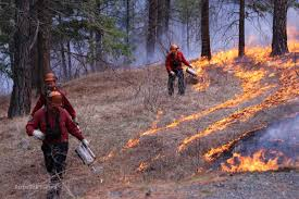Wildfire Lytton Bc by In Pictures Why A Controlled Burn Infonews Ca