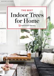 Great Indoor Trees Hgtv by Awesome Trees For Indoors Pictures Interior Design Ideas