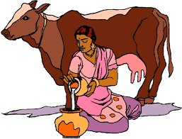 indian cow clipart images clipartxtras