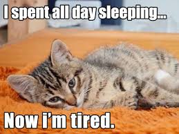 Cat Problems Meme - 10 hilariously heartbreaking first world cat problems that we