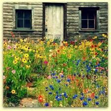 Home Garden Design Tips by Wildflower Garden Design Wildflower Garden Design Garden Design