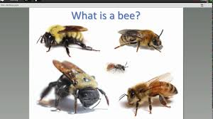 bees in your backyard with olivia carril youtube