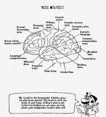 brain anatomy coloring pages with regard to inspire in coloring