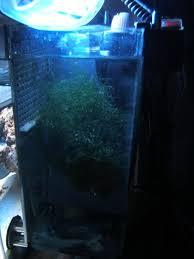 Refugium Light My First 3g Picotope Pico Reefs Nano Reef Com Community