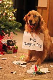 best funny quotes i u0027m a nativity eating jerk 31 dogs who