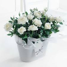 White Rose Bouquet Buy Roses Online Roses Delivered With Free Delivery Flying Flowers