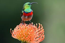 protea flower protea san diego zoo animals plants