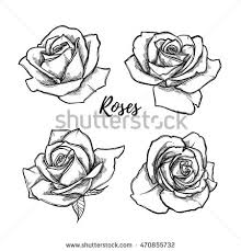 rose etching stock images royalty free images u0026 vectors