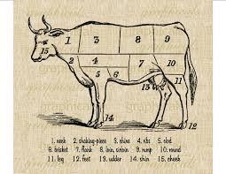 beef cuts butcher chart instant clip art digital download